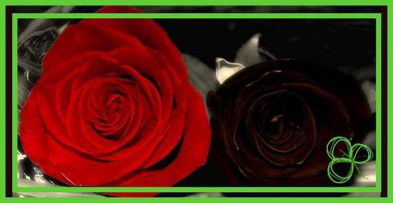 Фрейд о любви и ненависти